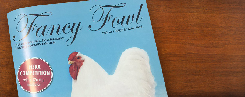 peckfeather-blog-fancy-fowl